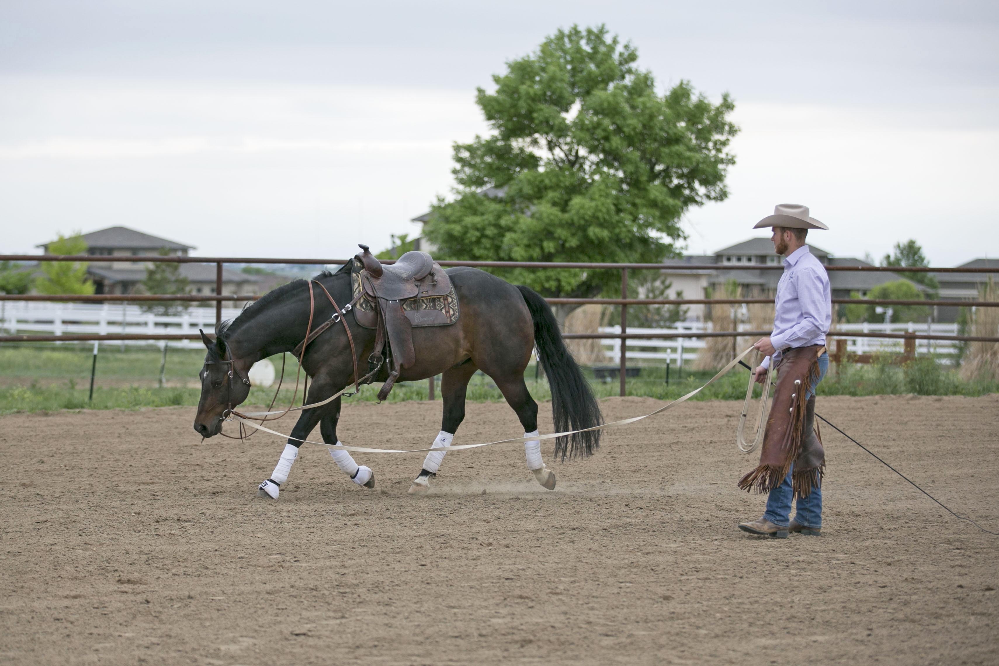 Horse Training in Colorado